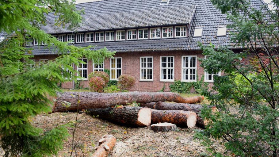 Ersatzpflanzungen für die gefällten Kiefern an der Waldschule hat die Stadt angekündigt