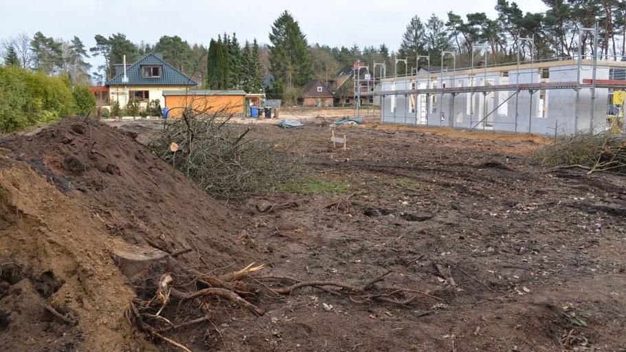 Auch hier an der Ulzburger Landstraße gab es eine (zulässige) großflächige Rodung eines alten Baumbestandes