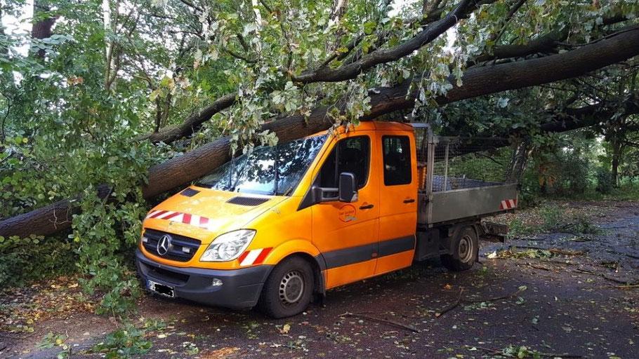 Dumm gelaufen - oder dumm gemacht? Dieses Fahrzeug des Bauhofes wurde von einem umstürzenden Baum getroffen.