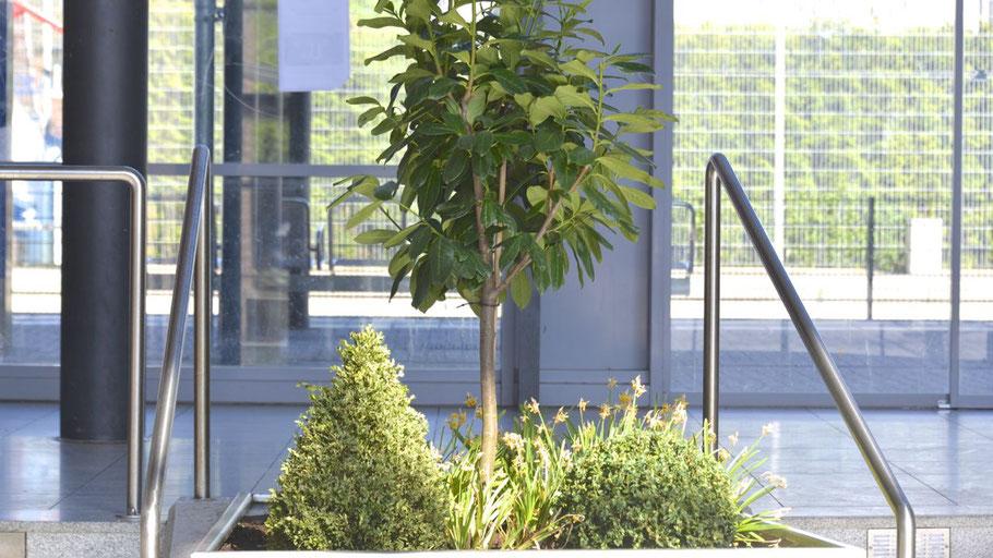 So ist es recht,  so soll es bleiben: die Bepflanzung in der Forums-Halle.