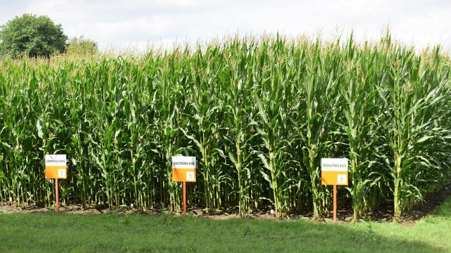 Was hat es mit der Beschilderung des Maisfeldes auf sich? Unser Beitrag verrät es.