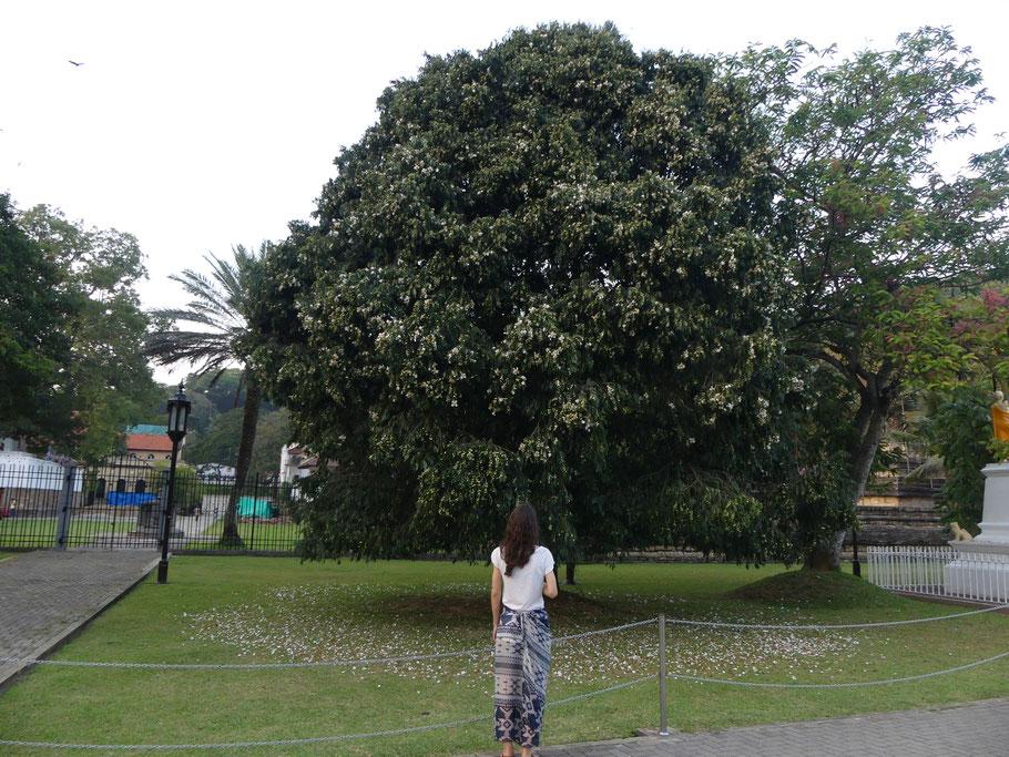 Parc de Mahamaluwa