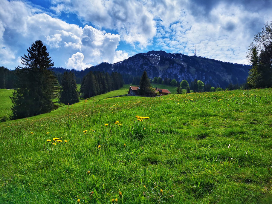 Aufstieg zur Alpe Kammeregg