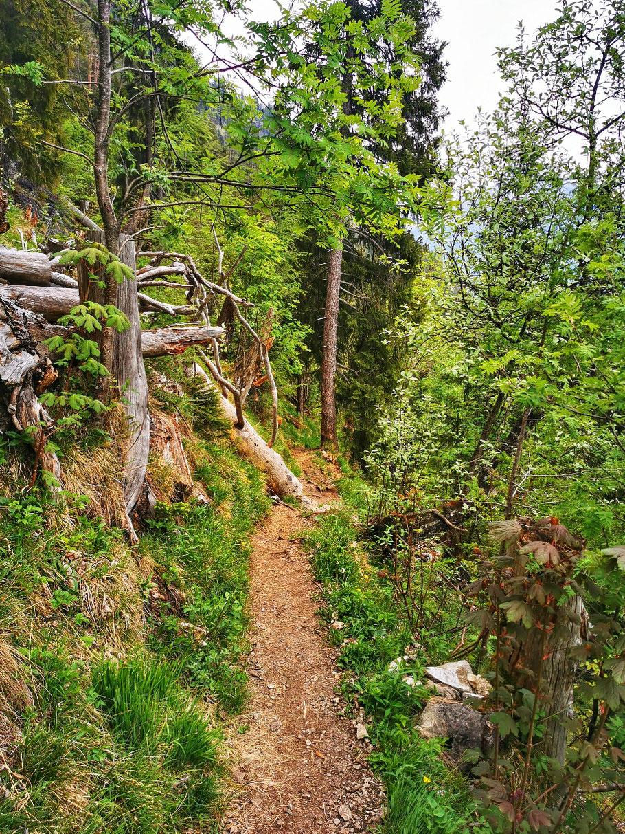 Abstieg durch den Wald, dessen Schönheit ich nach mittlerweile 7 Stunden nicht mehr so recht zu schätzen weiß