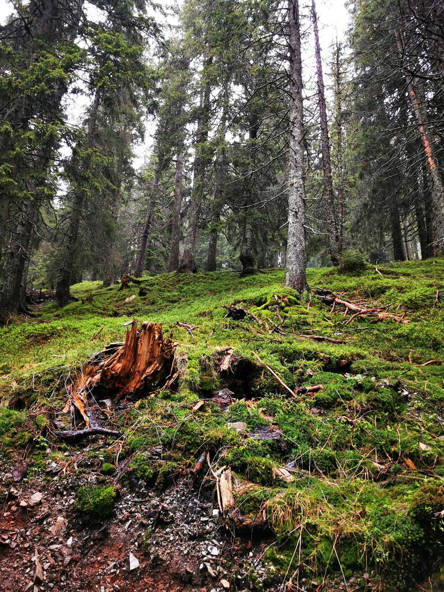 ... über gemütliche Waldwege...