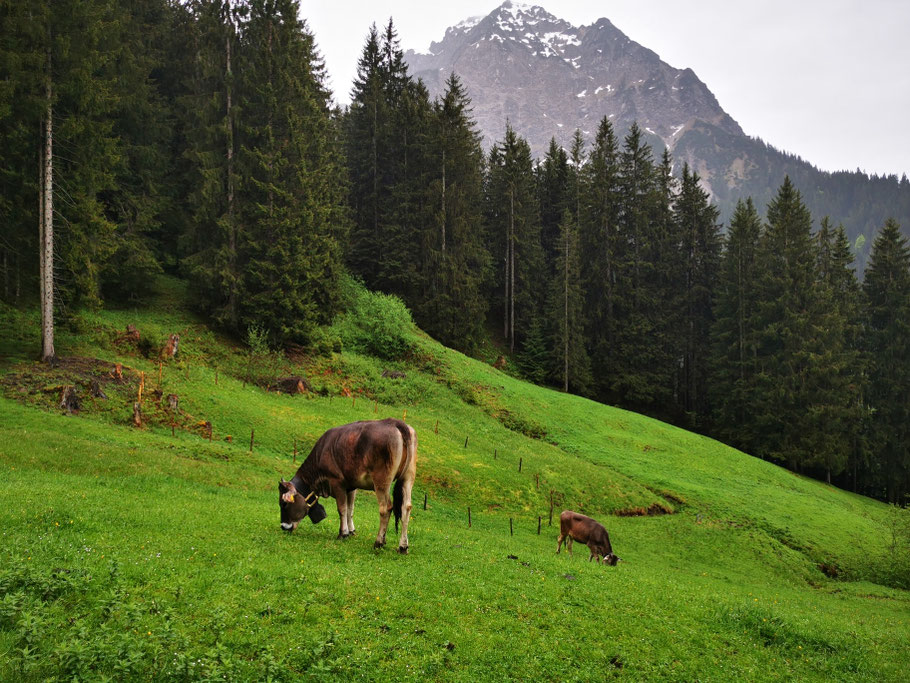 Bergidylle, im Hintergrund das Rubihorn