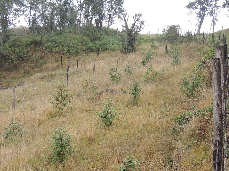 Siembra en la Reserva Natural Waldruhe II