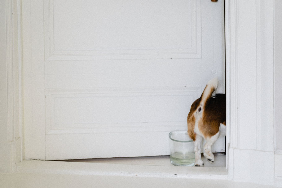 Hundepopo Hund Arsch Schwanz Glas Wasser
