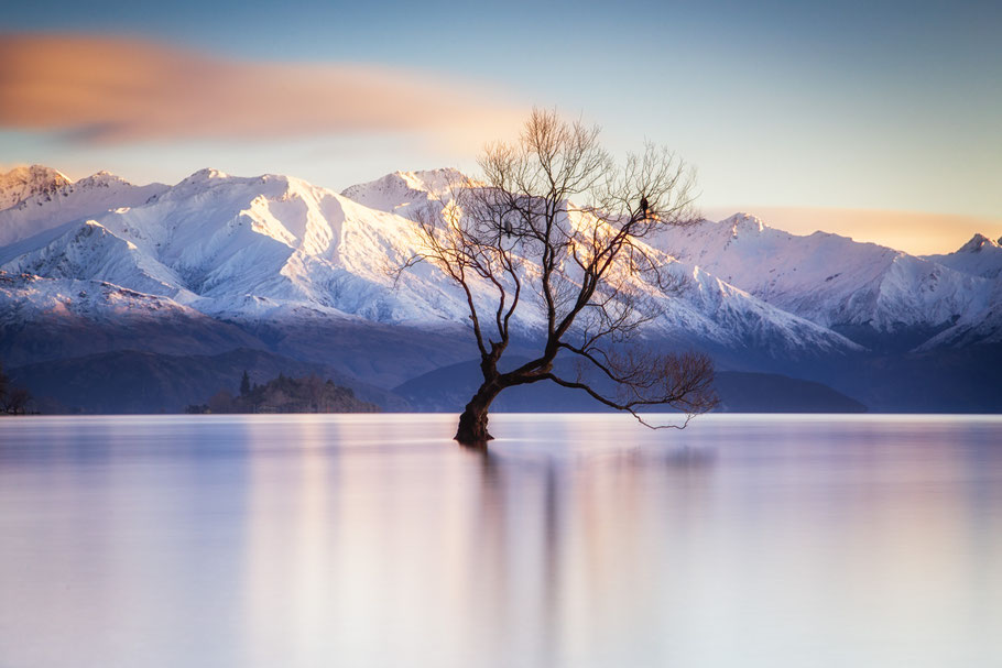 A solitary tree branch washes up on the shore of Lake Wanaka