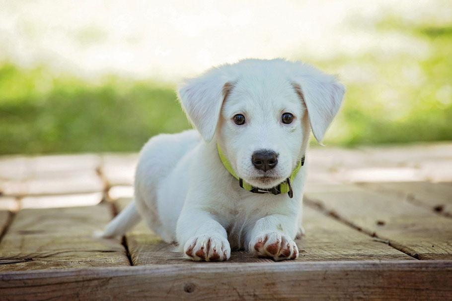 DM4U-hondenshampoo-shampoo-conditioner-parfum-parfume-verzorgende-zalf-halsband-leiband-hond-honden-puppy-pup