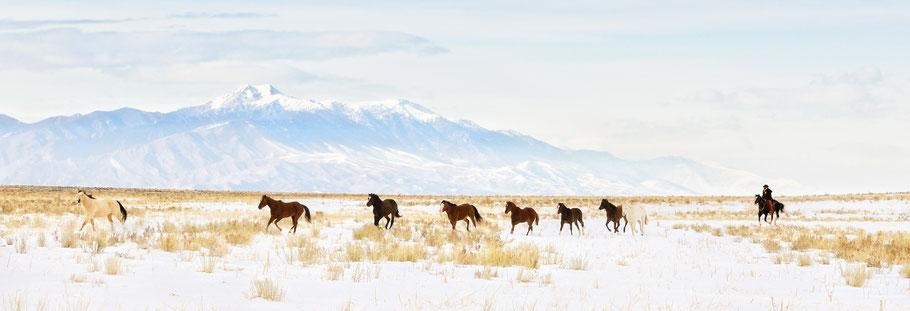 horses alberta