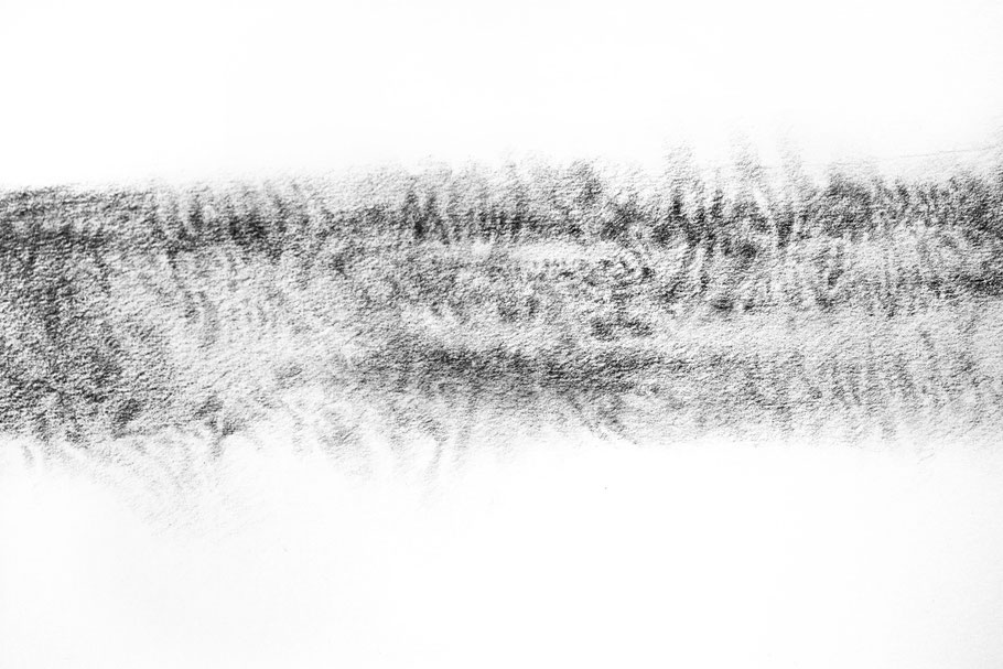 [ Feather ] Lápiz carboncillo sobre papel. Detalle.
