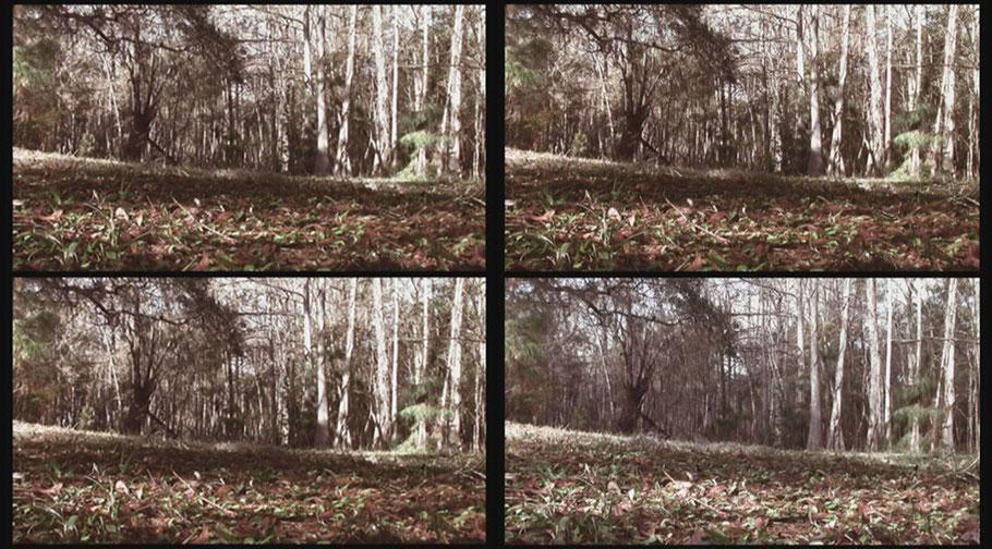 [ Forest ] Captura de la transición de uno de los vídeos proyectados. Detalle.