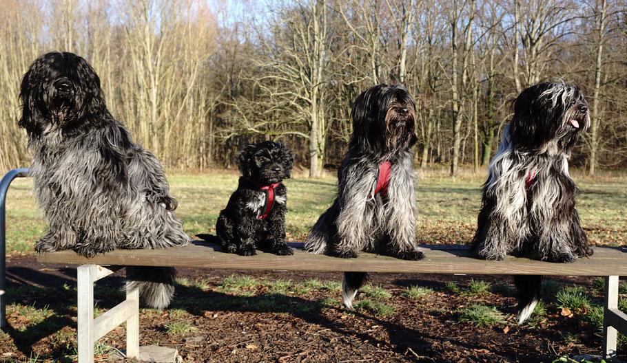 Die Auwaldwuffel: Camille, Bisou, Jane, Cooper (vl.n.r.)