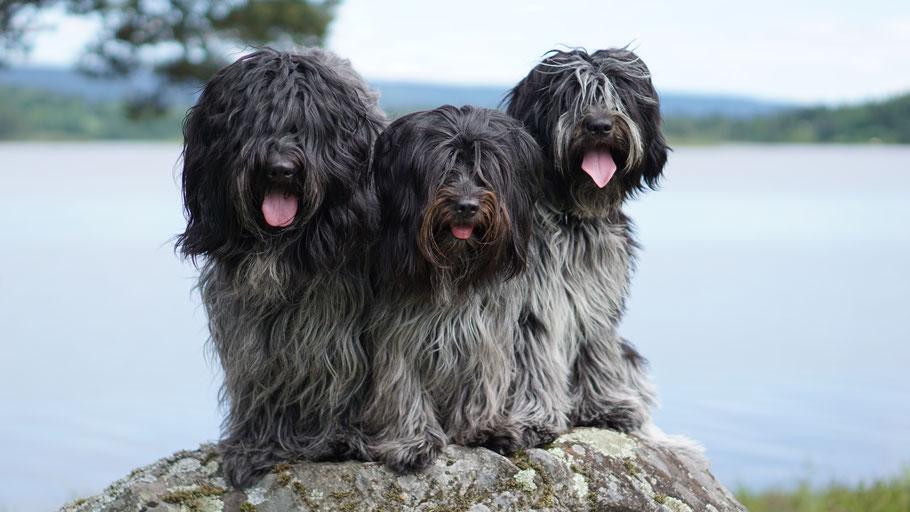Das sind wir: Cooper, Jane & Bisou (v.l.n.r.) - Camille fehlt zu diesem Zeitpunkt noch