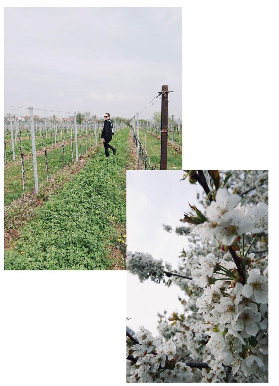 Wanderung durch die Weinberge an der Südlichen Weinstraße
