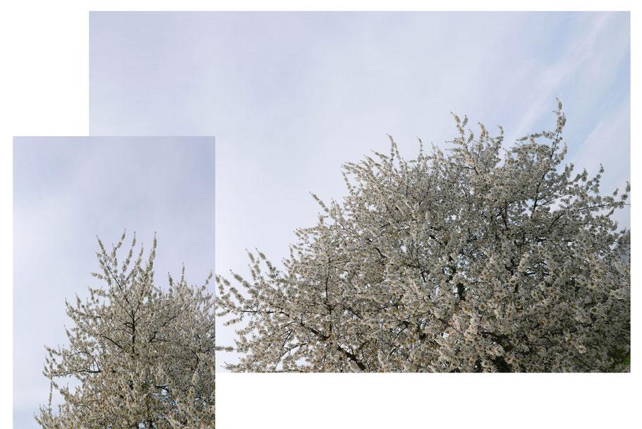Blauer Himmel & Wein = Frühlingsgefühle