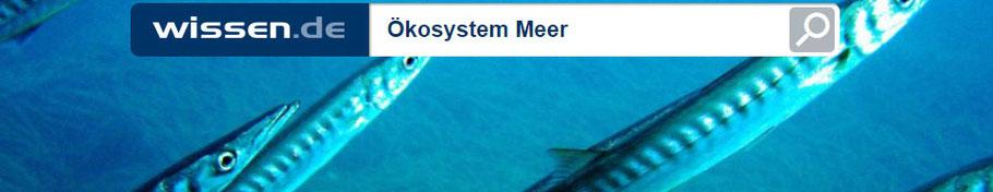 Das Ökosystem Meer auf wissen.de - mit Wissensüberprüfung