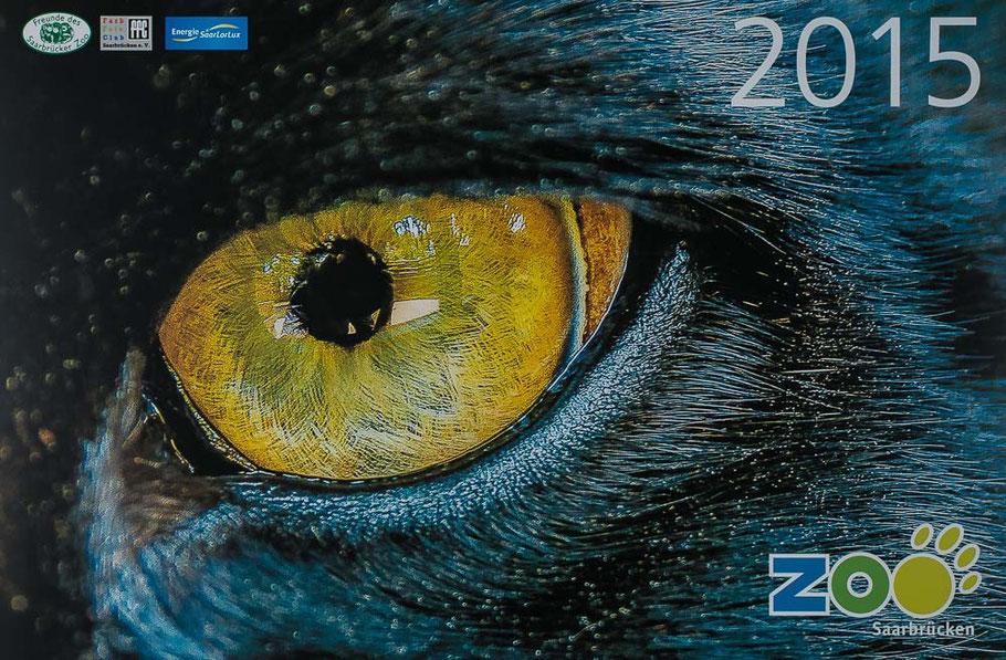 "Schwarzer Jaguar ""Ginger"" - Panthera onca - Zoo Saarbrücken"