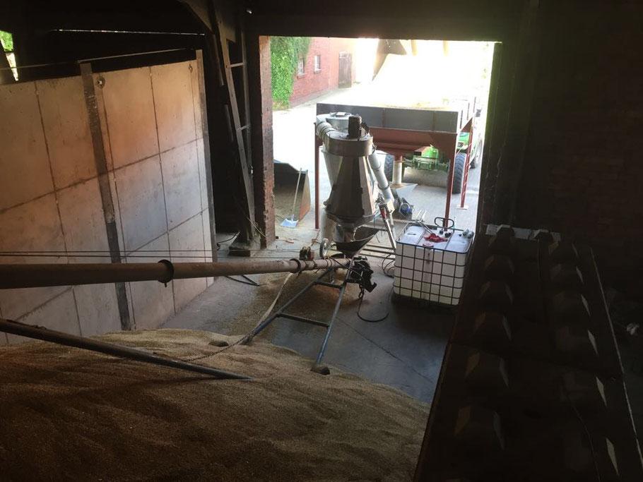 Das Getreide für unsere Schweine wird nach der Ernte gereinigt und in mehreren Flachlagern eingelagert.