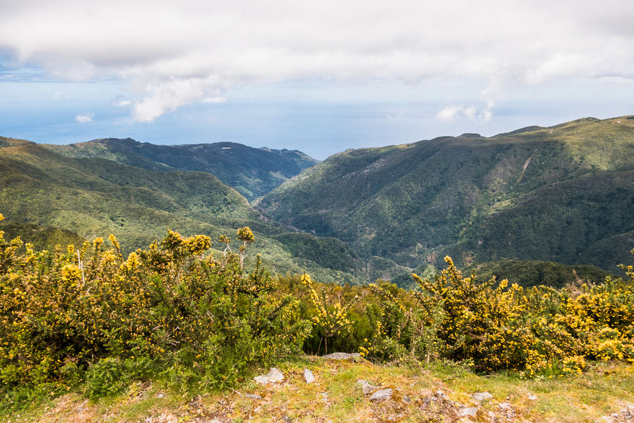 Brem op de rotsformaties, Madeira