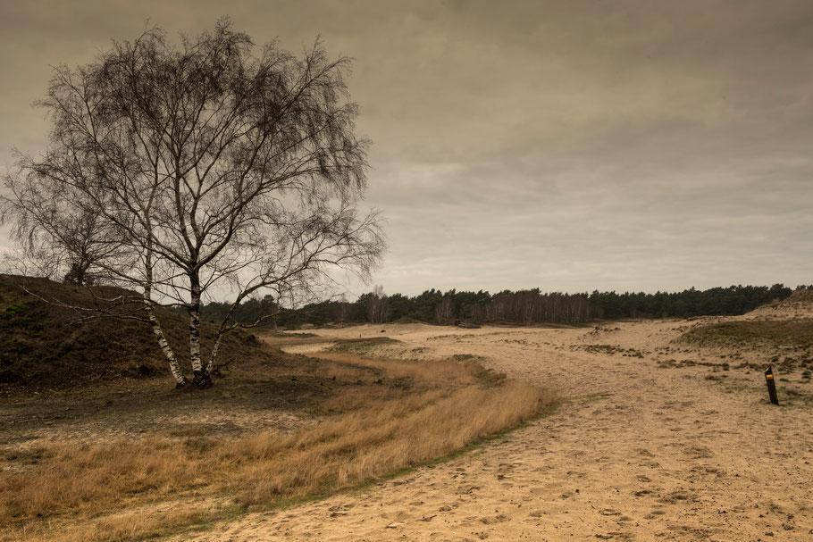 De uitgestrektheid van het Hulshorster Zand