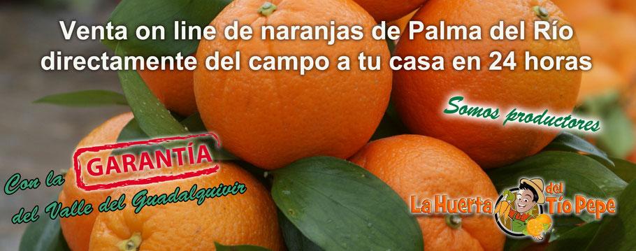 Naranjas recién recolectadas, con el clima del Guadalquivir, el sol de Andalucía y una recolección en su justo momento.
