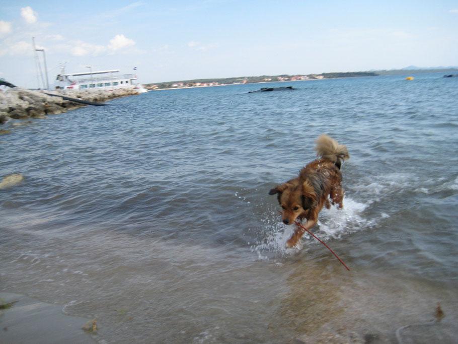 Für uns war das Wasser noch ein wenig kalt. Dem Hund macht es nichts aus.