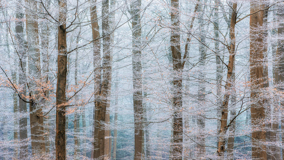 Winter forest ©JurjenVeerman