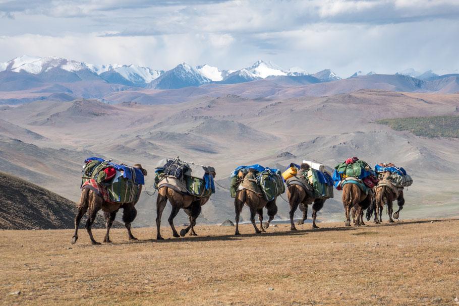 Mit Kamelen durch die Westmongolei
