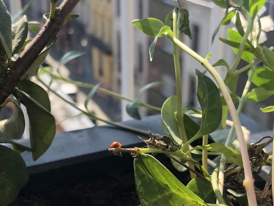 Les insectes utiles au jardin - Marguerite Ferry - Urban Garden Designer - Brussels - Blog Jardin Belgique