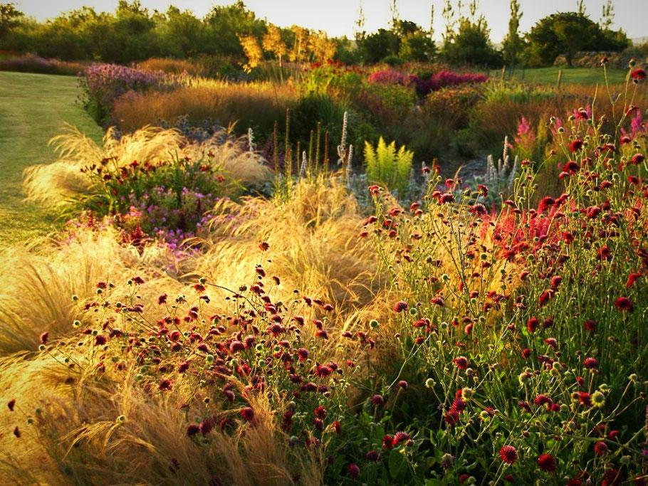 Jardin Paysagiste contemporain - Jardin de vivaces - Piet Oudolf - Marguerite Ferry - Urban Garden Designer - Bruxelles
