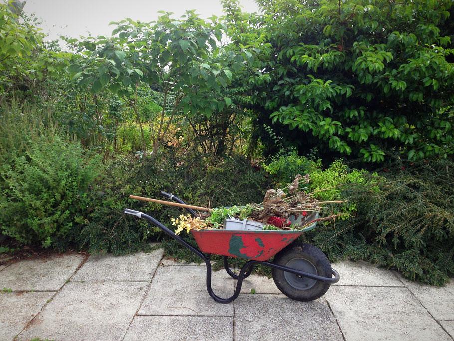 Plantations d'automne - Marguerite Ferry - Urban Garden Designer - Bruxelles - Blog Jardin Belgique