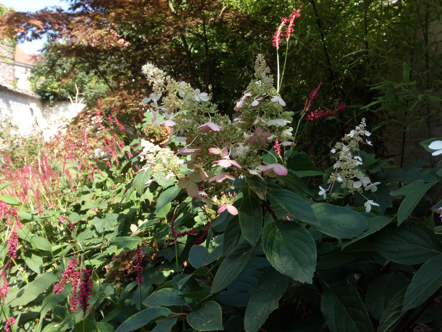 Plantation d'arbustes automne - Marguerite Ferry / Urban Garden Designer - Bruxelles - Blog Jardin Belgique