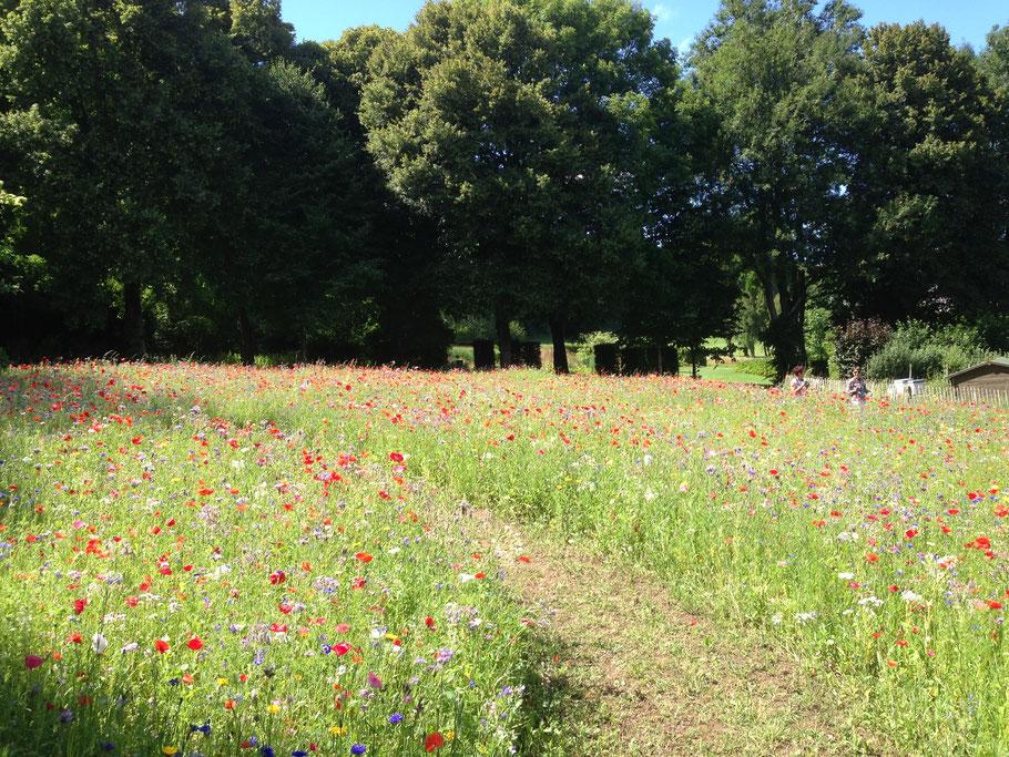 Jardin sans entretien - Abbaye de Valloire - Jardin en mouvement de Gilles Clément - Blog Jardin Belgique