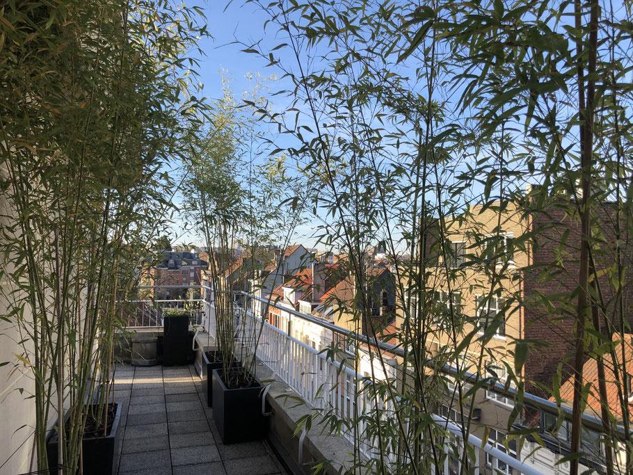 Aménagement Balcon étroit - Marguerite Ferry - Urban Garden Designer - Blog Jardin Belgique