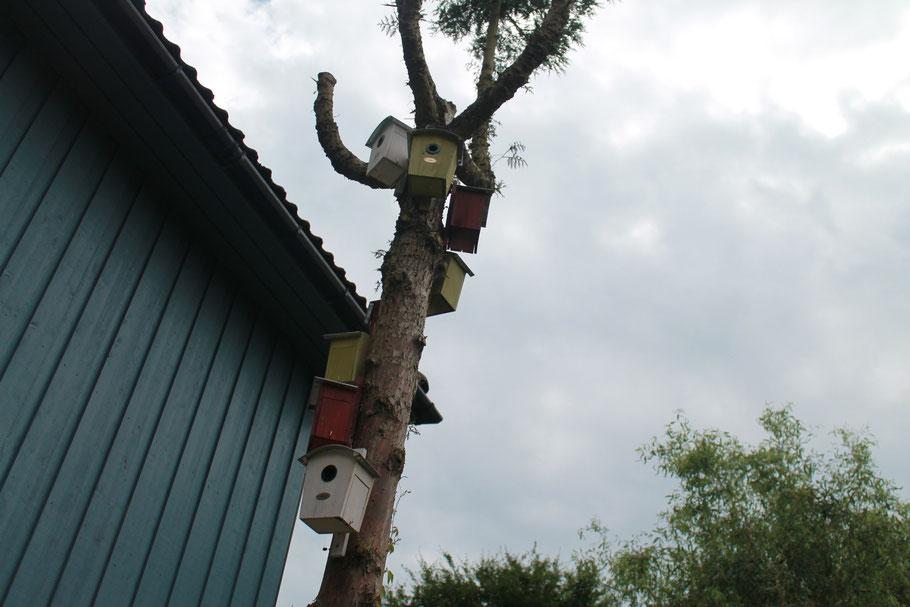 Nistkastenbaum mit acht Nistkästen