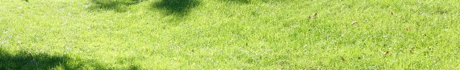Koestelgarten Rasen als Naturstrategie