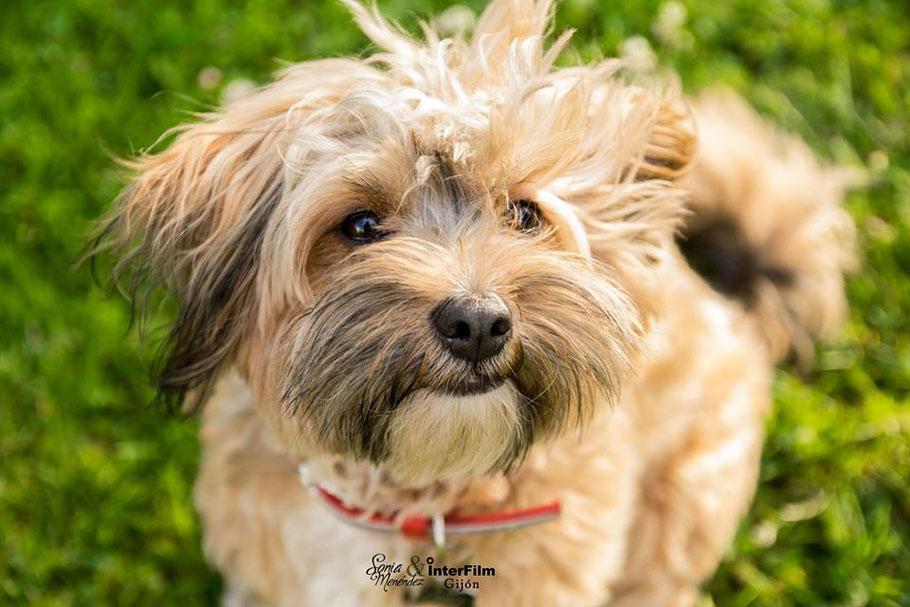 fotografo mascotas en gijon