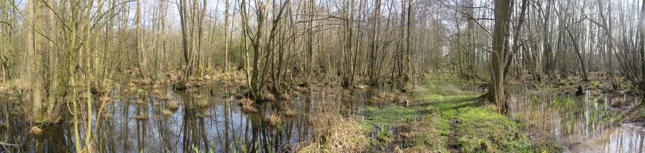 Links het Adderbroekbos en rechts het Golfbroekbos. Met ertussenin de wal, die hier op 8-3-2014 begaanbaar is.