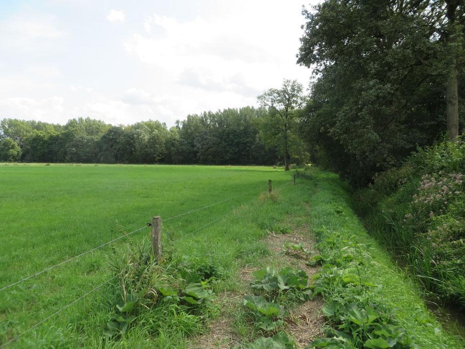 Links de weilanden van de Molenwei/Haafs ten oosten van de Beneden Slinge met op de achtergrond het Populierenbos en rechts de Beneden Slinge.
