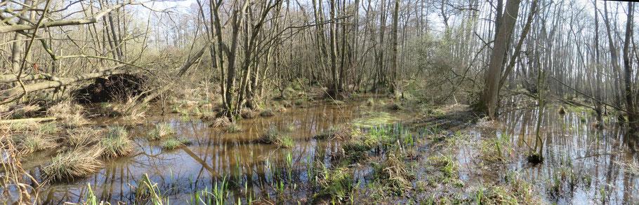Links het Adderbroek en rechts het Golfbroek. De wal is nog te herkennen aan de plantepollen die nog boven het water uitkomen..