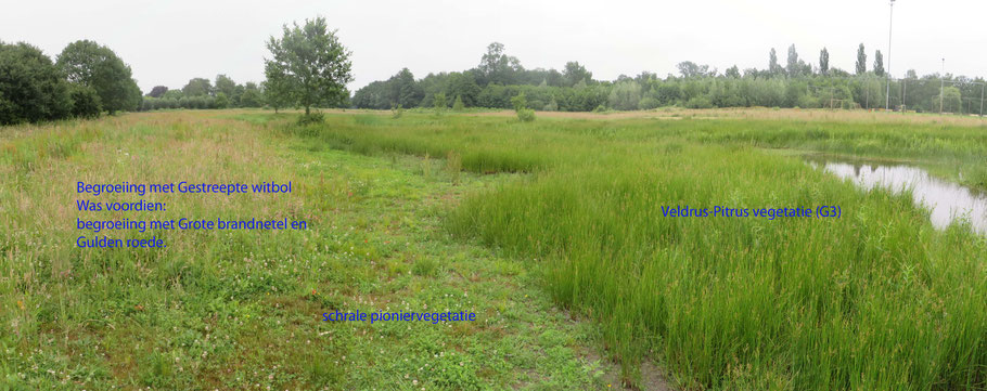 Gronden langs het beekje in Groenendaal opnieuw geplagd om ruigte om te zetten in schrale vegetatie.
