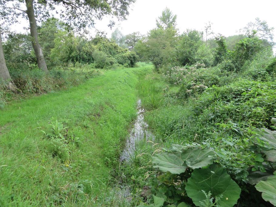 De Beneden Slinge voert nog water, doordat de beek grondwater dat vanuit de Slangenburg wordt aangevoerd, afvangt.