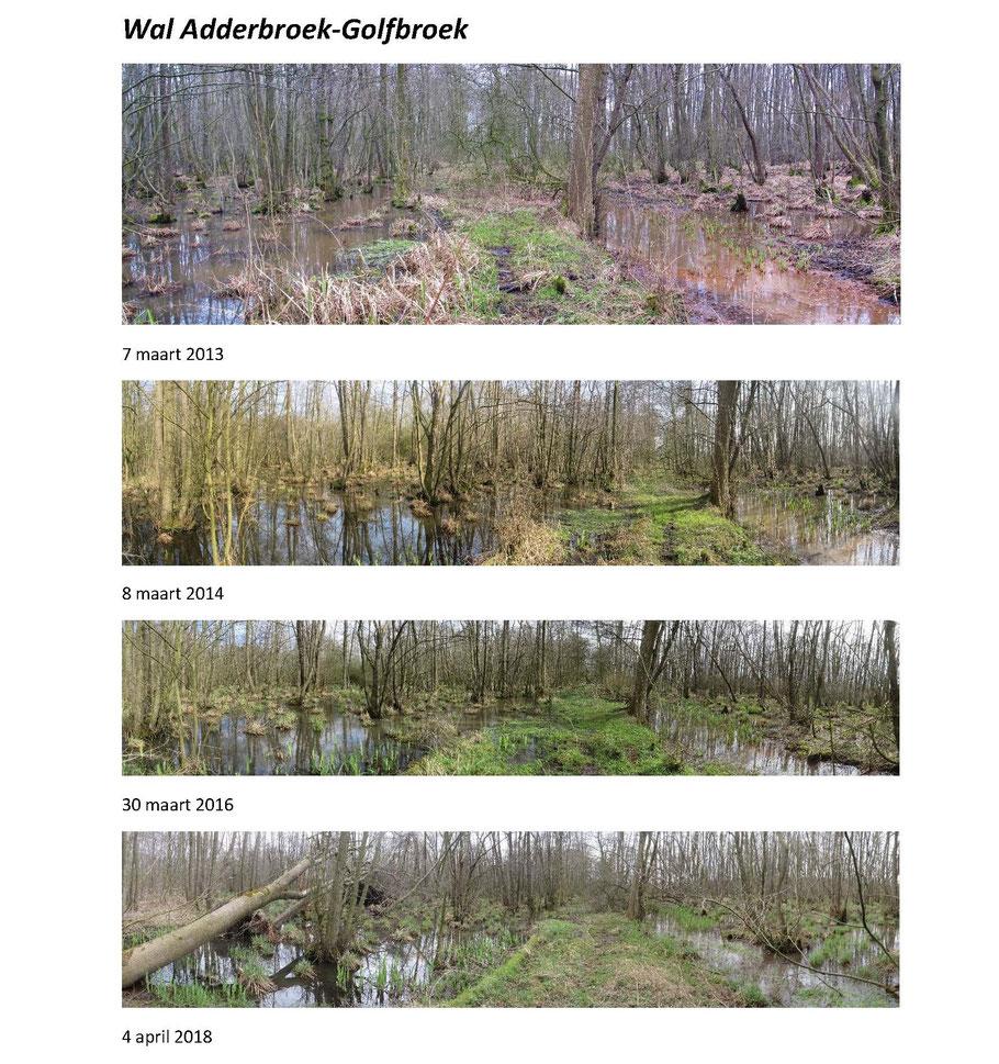 De wal tussen het Adderbroek en het Golfbroek in maart/april in relatief droge jaren (2013-2018). De wal is nog begaanbaar.
