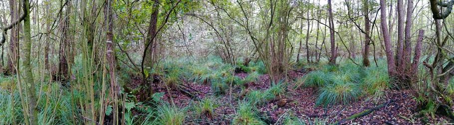Adderbroekbos op 6 oktober 2020. Het laagst gelegen stuk staat ook droog.