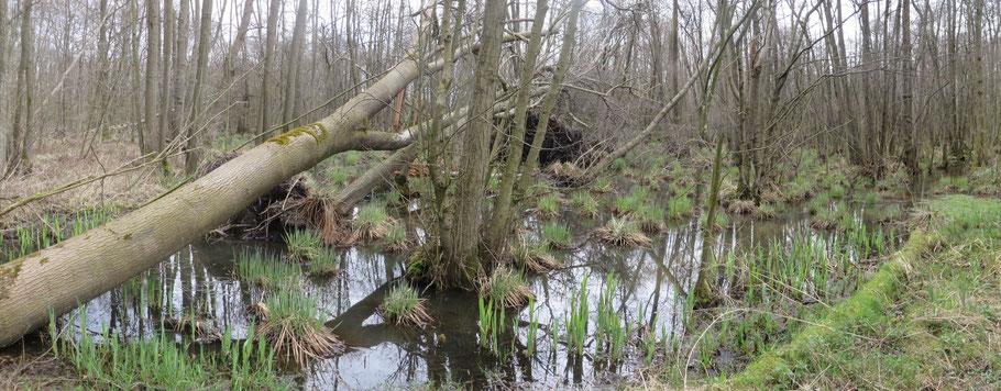 Adderbroek 4-4-2018 (gefotografeerd op dezelfde locatie als hierboven), na een storm. Een reeks van 3 bomen is omgewaaid.