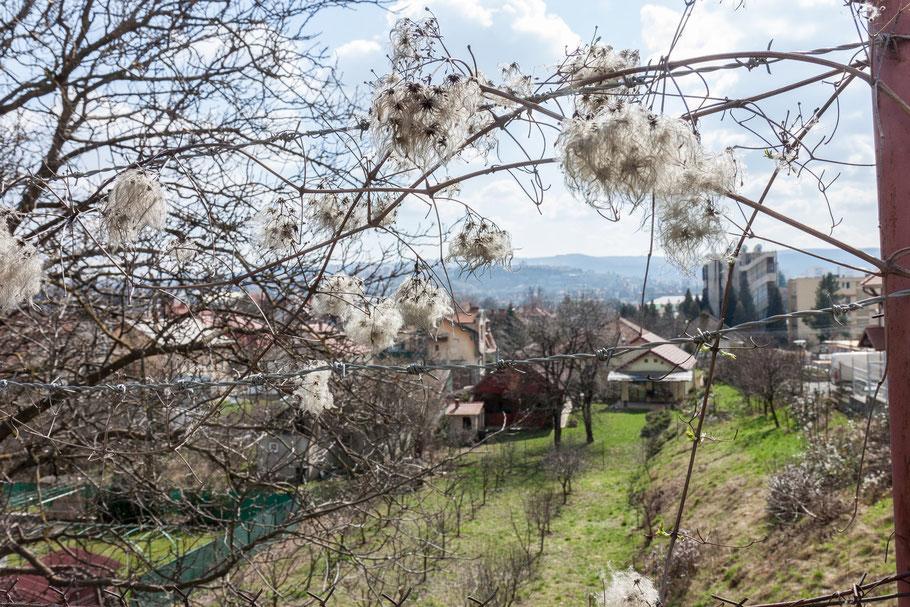 Strauch überwuchert Stacheldraht, der die Grenze eines Wohngebietes markiert. (c) Salomé Weber
