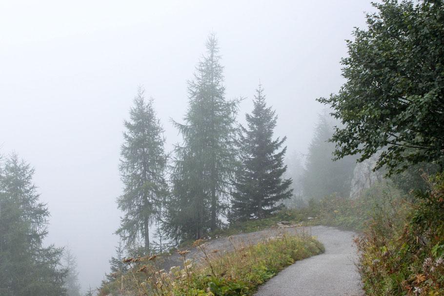 Bäume im Nebel (c) Salomé Weber