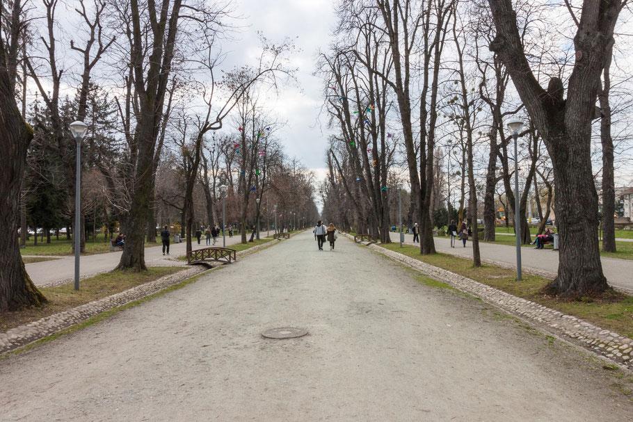 Central Park in Cluj-Napoca (c) Salomé Weber